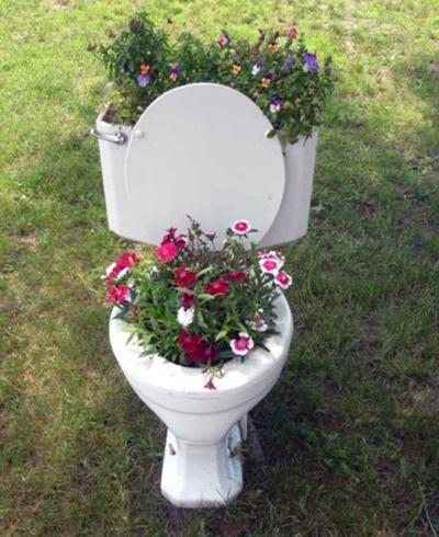 toilet flowers